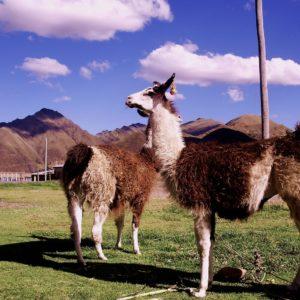 Perú Cuatro Perlas del Sur