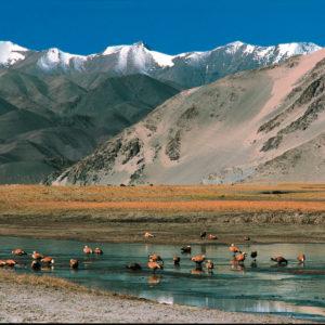 Ladakh esencial