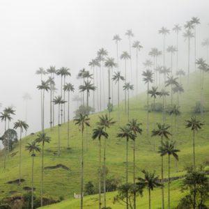 Colombia Cafetera y Caribeña